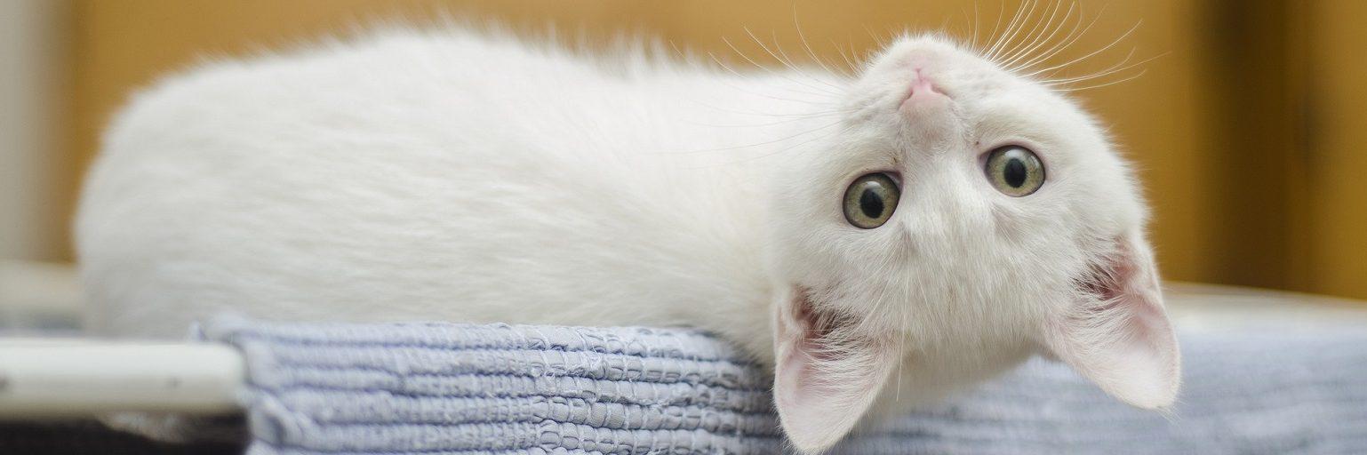 Providing perfect pet care